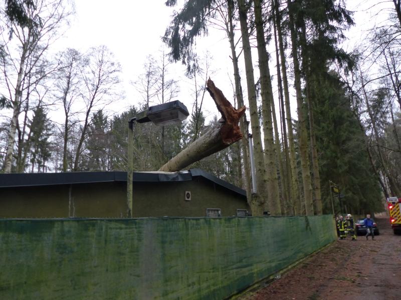 Baum auf Gebäude